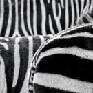 https://www.pexels.com/photo/black-and-white-zebra-patternt-50558/