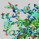 A protein structure models obtained by DeepMind's AlphaFold program.